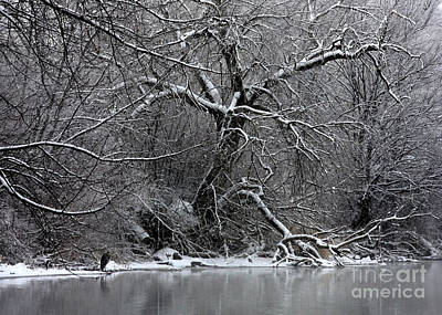 Photograph - Winter Solitude by Carol Groenen