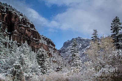 Photograph - Winter Solitude by Jim McCain