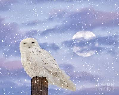 Rare Bird Of Canada Photograph - Winter Solstice by Heather King
