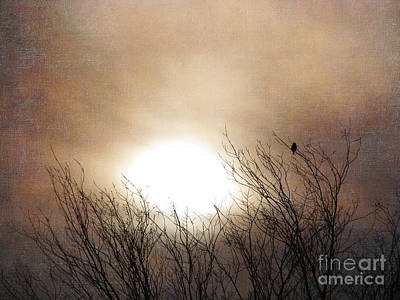 Photograph - Winter Solstice by Roselynne Broussard