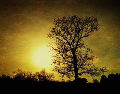 Photograph - Winter Solstice Sun by Frank Winters
