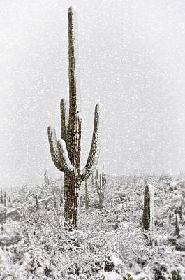 Rincon Photograph - Winter Sonoran Style  by Saija  Lehtonen