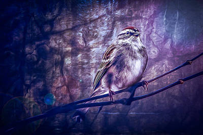 Photograph - Winter Sparrow by Joshua Minso