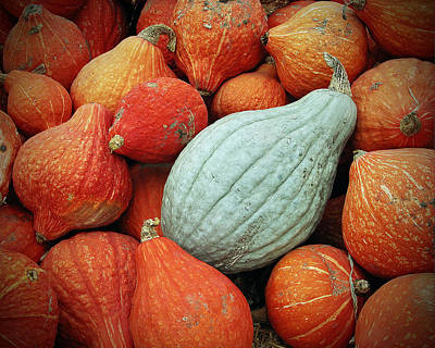 Farm Stand Photograph - Winter Squash 1 by Charlette Miller