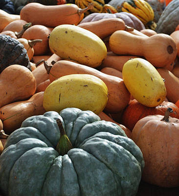 Photograph - Winter Squash by Holly Blunkall