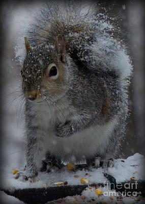 Photograph - Winter Squirrel 1 by Sandra Clark