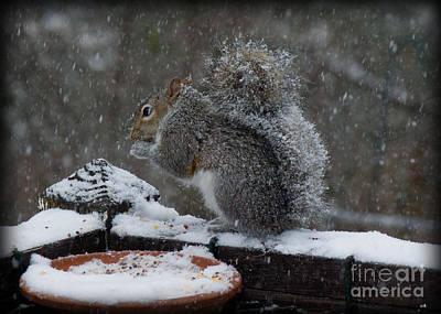 Photograph - Winter Squirrel 3 by Sandra Clark