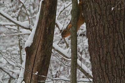 Squirrel Photograph - Winter Squirrel by Dan Sproul