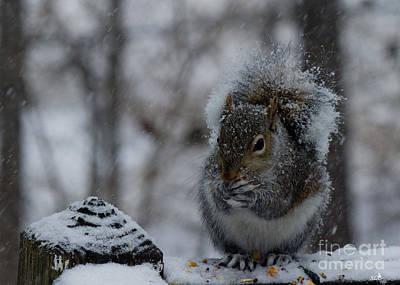 Photograph - Winter Squirrrel 2 by Sandra Clark