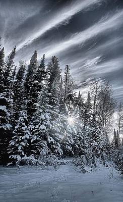 Photograph - Winter Star by David Andersen