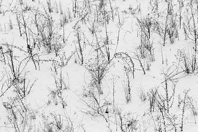 Photograph - Winter Starkness by Diane Macdonald