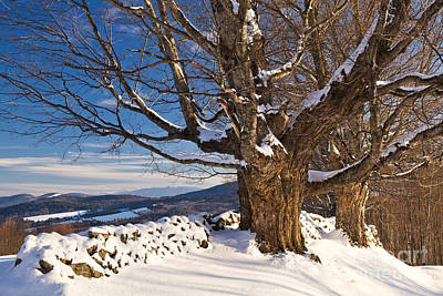 Photograph - Winter Stone Wall Landscape by Alan L Graham