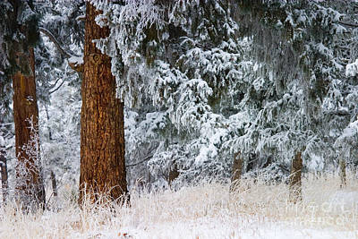 Steven Krull Royalty-Free and Rights-Managed Images - Winter Storm by Steven Krull