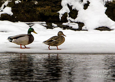 Photograph - Winter Stroll by Brad Marzolf Photography
