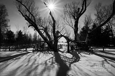Photograph - Winter Sun And Shadows by Charline Xia