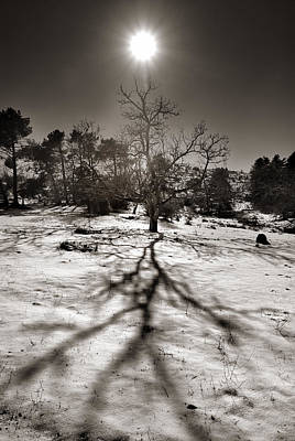 Andscape Photograph - Winter Sun by Guido Montanes Castillo