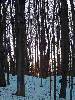 Photograph - Winter Sun Sets In The Maine Woods by Expressionistart studio Priscilla Batzell