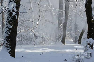 Winter Sunny Day Print by Dan Marinescu