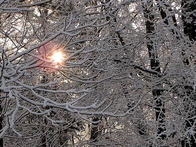 Photograph - Winter Sunrise by Greg Simmons