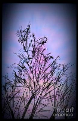 Photograph - Winter Sunrise by Judy Via-Wolff