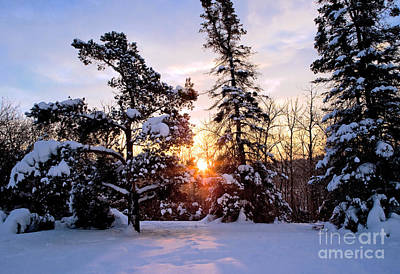 Trees In Winter Photograph - Winter Sunrise by Terry Elniski