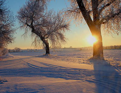 Photograph - Winter Sunrise by Trent Mallett