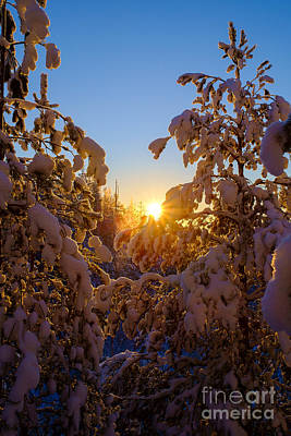 Photograph - Winter Sunset Behind The Trees by Ismo Raisanen