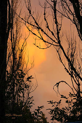 Photograph - Winter Sunset II by Jeanette C Landstrom