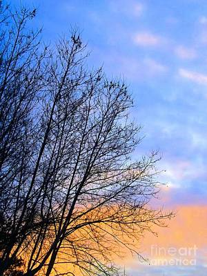 Photograph - Winter Sunset by Robyn King