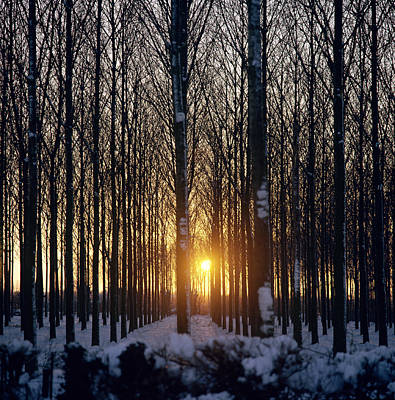 The Trees Photograph - Winter Sunset Through The Trees by Robert Hallmann