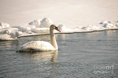 Animal Watercolors Juan Bosco - Winter Swan by Grace Grogan
