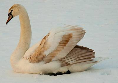 Winter Swan Song Art Print by Bruce Carpenter