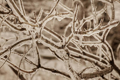 Photograph - Winter Tangle by Bill Pevlor