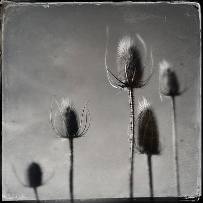 Photograph - Winter Thistle by Dorian Hill