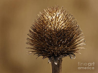 Photograph - Winter Thistle by Inge Riis McDonald