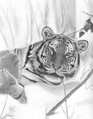 Drawing - Winter Tiger by Christian Conner