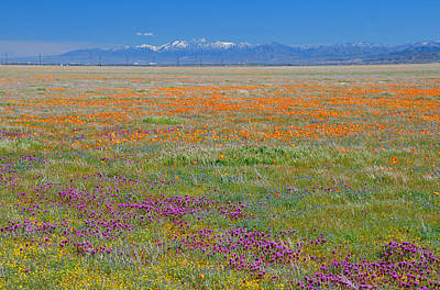 Wildflowers Photograph - Winter To Spring by Lynn Bauer