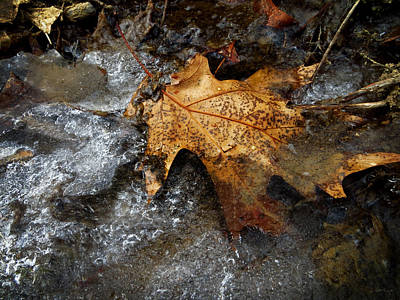 Photograph - Winter Trail by Shawna Rowe