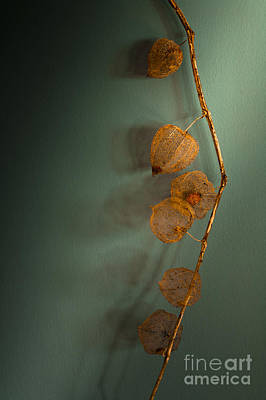 Dried Photograph - Winter Treasures by Jan Bickerton