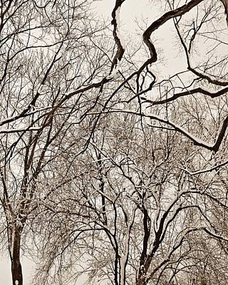 Photograph - Winter Tree Abstract  by Chris Berry