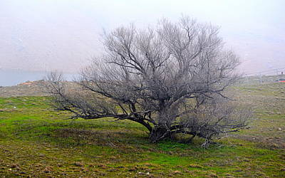 Photograph - Winter Tree by AJ  Schibig