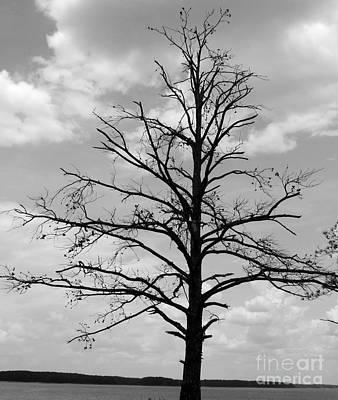 Winter Tree Art Print by Andrea Anderegg