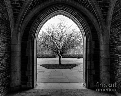 Winter Tree At Duke University Art Print by Emily Kay