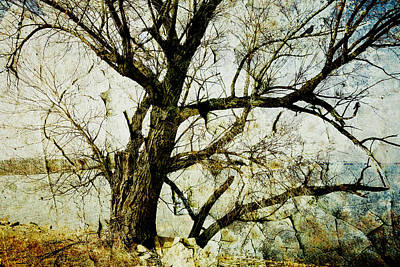 Winter Tree At The  Lake Shore  Print by Ann Powell