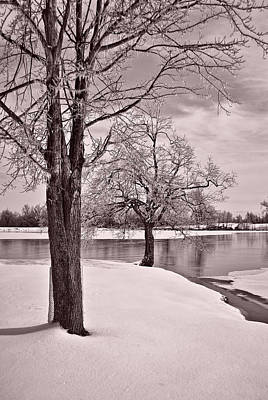 Photograph - Winter Tree At The Park 3 B/w by Greg Jackson