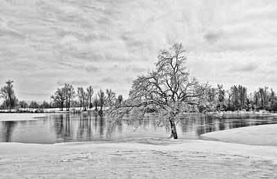 Photograph - Winter Tree At The Park 5 B/w by Greg Jackson