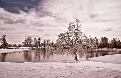 Photograph - Winter Tree At The Park 5t by Greg Jackson