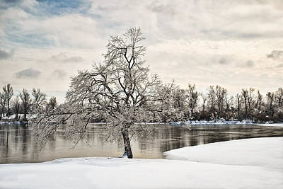 Photograph - Winter Tree At The Park by Greg Jackson