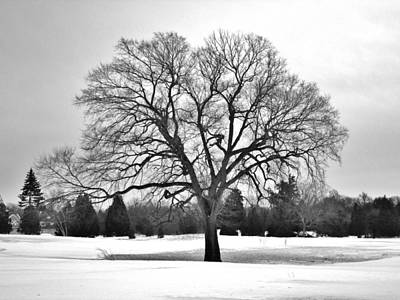 Photograph - Winter Tree by CJ Rhilinger
