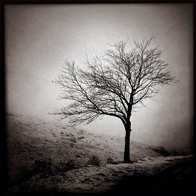 Glencoe Photograph - Winter Tree by Dave Bowman